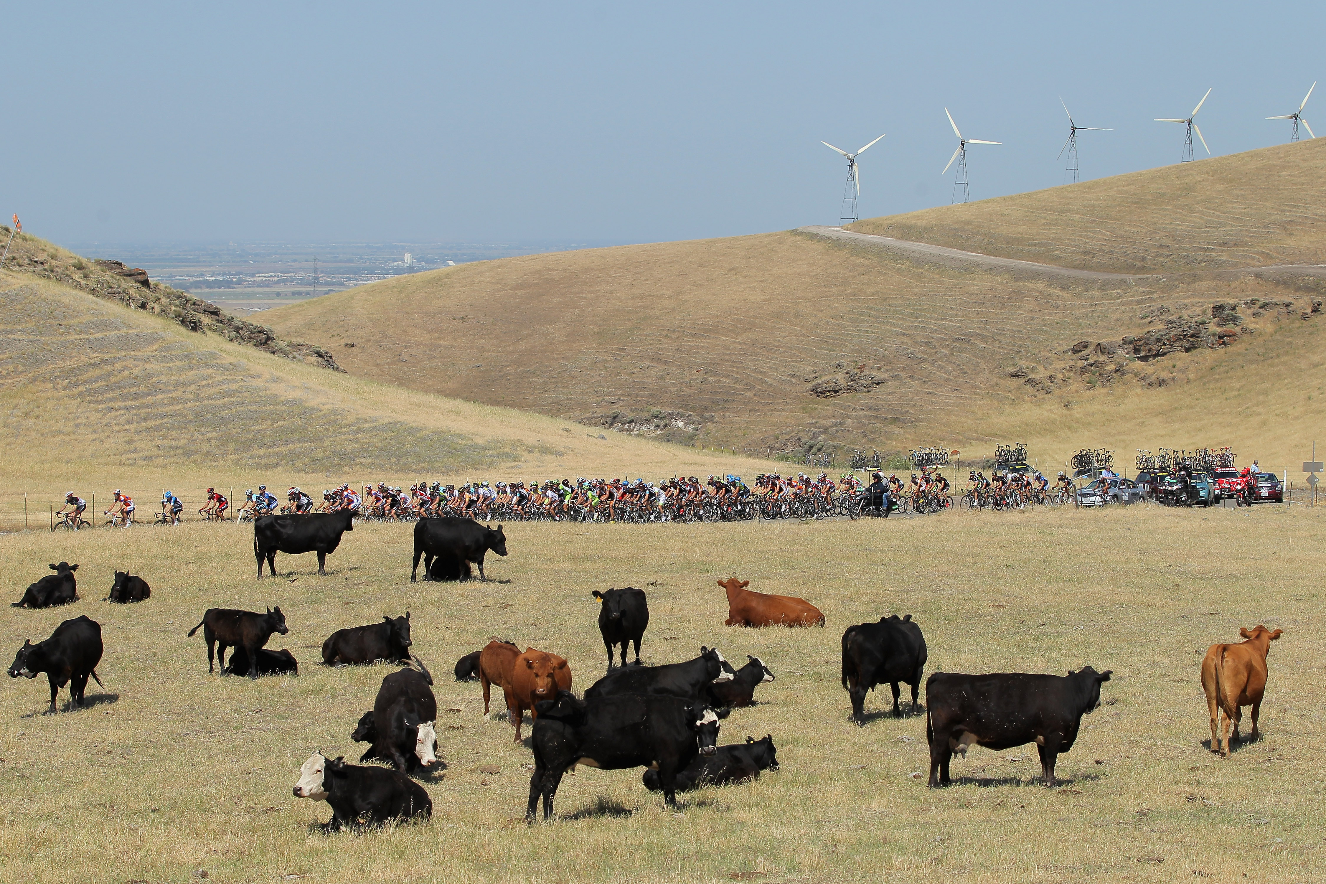 LIVERMORE, CA - MAY 15:  The peloton passes a herd of cows as windmills loom in the background as they climb Patterson Pass during stage three of the Amgen Tour of California from San Jose to Livermore on May 15, 2012 in Livermore, California.  (Photo by Doug Pensinger/Getty Images)